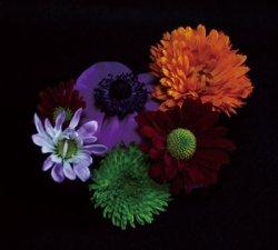 画像1: 雨風食堂 / 花と弁